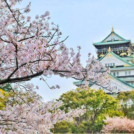 Mari가 주최하는 일본 모임